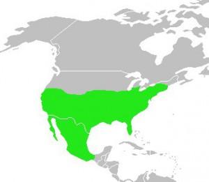 Mapa sinsonte
